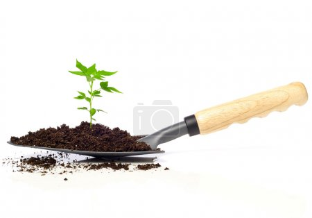 Growing tree on a trowel
