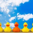 Rubber ducks in a row with one of them tanned sitt...
