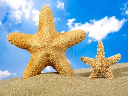 Starfish parent and starfish child