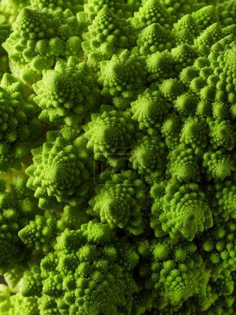Photo for Romanesco broccoli close-up - Royalty Free Image