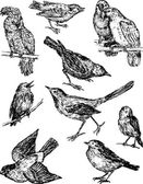 wild birds sketches
