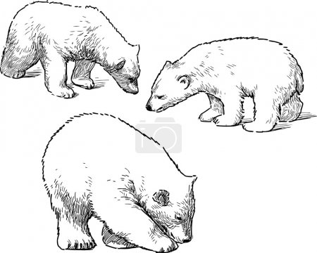 babies polar bears