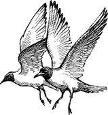 sea gulls sketch
