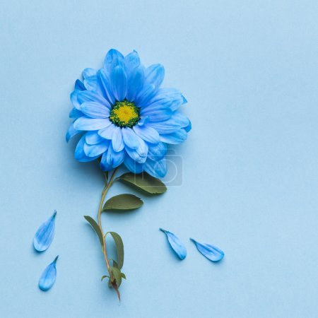 Photo for Blue flowers on blue background. Blooming concept. Flat lay. - Royalty Free Image