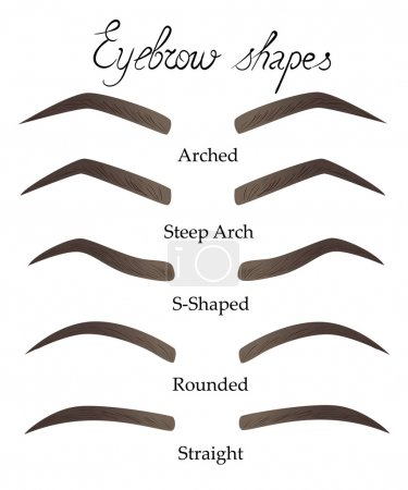 Female eyebrows in different shapes forms