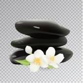 Spa Stones with Jasmine Flower Isolated Vector Illustration Te