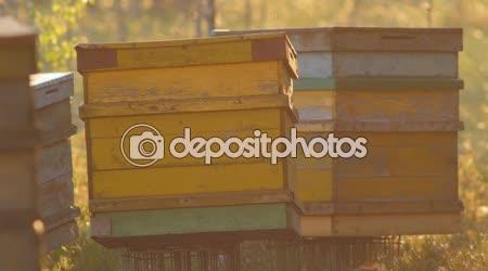 Přepravitelné žluté úly v bažiny