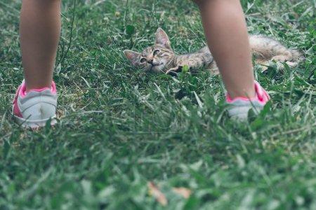Little cat in nature.