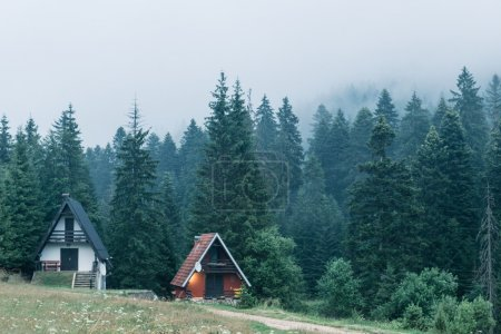 Houses in forest during fog