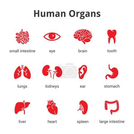Illustration for Medical human organs icon set - Royalty Free Image