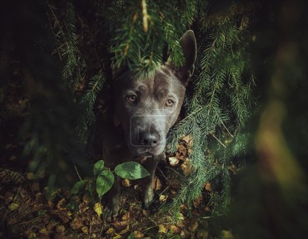 Beautiful grey dog in forest