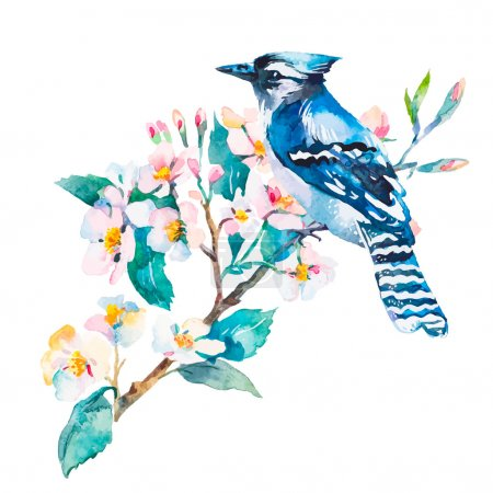 Blue jay isolated on a white background. Spring flowers.Watercolor..