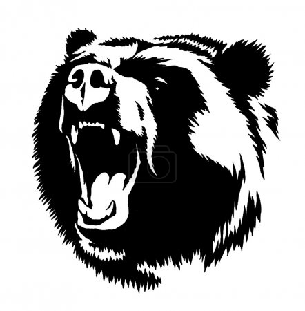 black and white ink draw bear illustration
