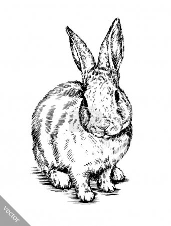 Illustration for Black and white vector brush painting ink draw isolated rabbit illustration - Royalty Free Image