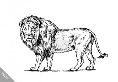 Brush painting ink draw isolated lion illustration