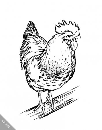 Illustration for Black and white engrave ink draw isolated vector chicken illustration - Royalty Free Image