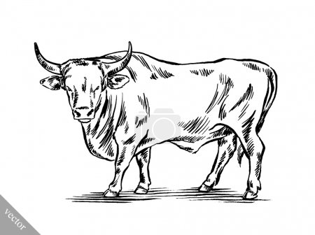Illustration for Black and white engrave ink draw cow vector illustration - Royalty Free Image