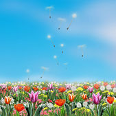 Garden with colorful flowers tulips and dandelion blowing in the green park and blue sky. Summer, Spring flowers realistic painting. For Art, Print, Home decor, Scrapbook, Album, web design. Hand Drawn Illustration.