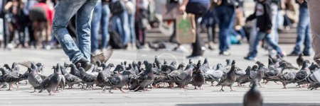 Group of pigeons outdoor