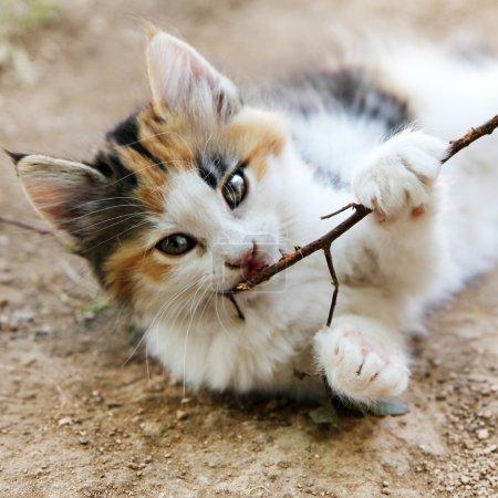 Photo pour Mignon chat chiot portrait - image libre de droit