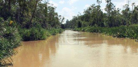 Borneo tropical jungle, Indonesia