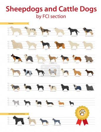 Illustration for FCI Sheepdogs and Cattle Dogs Group: Shepherd, Sheepdogs, Cattle, Australian, Kelpie, Belgian, Wolfdog, German, Beauceron, Collie, Border, Corgi, English, Shetland, Kuvasz, Puli, Pumi, Mudi, Dutch - Royalty Free Image