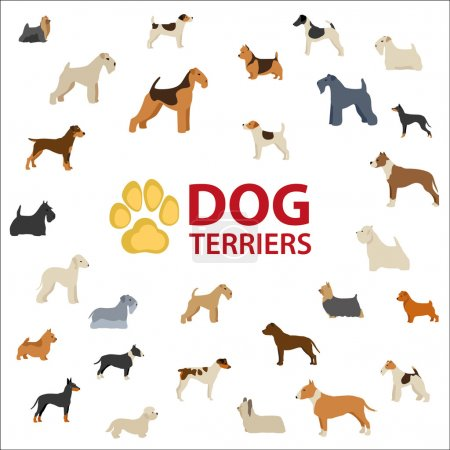 Dog Terriers breeds by FCI