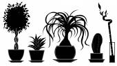 Set of vector plants in a pot