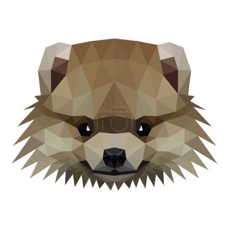 Low poly vector illustration of a pomeranian dog