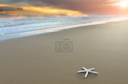 Star shellfish focus alone on the beach