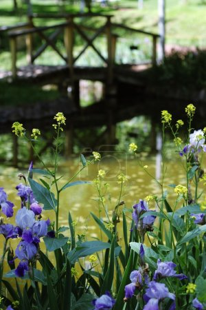 flowers around the pond with