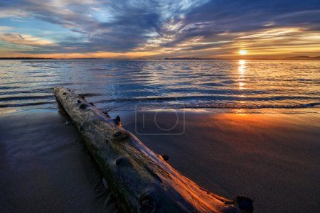 Log on the beach during sunset
