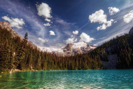 Photo pour Arbres à feuilles persistantes le long d'une montagne calme au bord du lac - image libre de droit