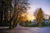 Serene suburban street with houses