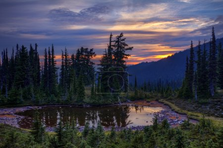 Photo for Clear lake, pine trees and mountains on the background - Royalty Free Image