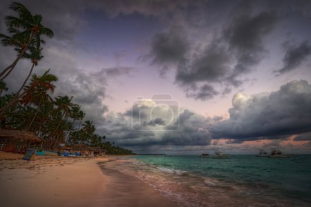 palm trees and sandy beach
