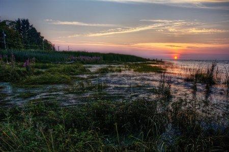 Marshy river side