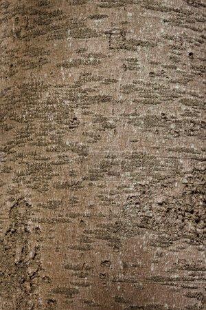 Photo pour Gros plan sur tronc d'arbre brun, arrière-plan de la nature - image libre de droit