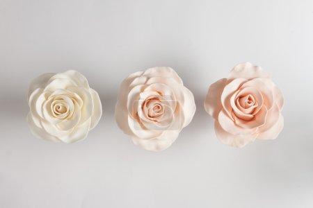 Photo pour Belles roses fondantes sur fond blanc vif - image libre de droit