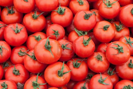 Photo for Pile of fresh tomatoes on green twigs - Royalty Free Image