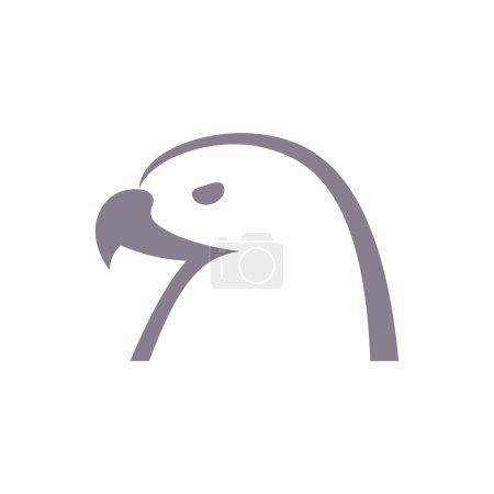 Eagles Head Animal Bird