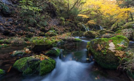 Photo for Picturesque landscape with waterfall in autumn forest - Royalty Free Image