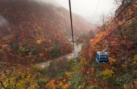 Cable car above  wooded mountains