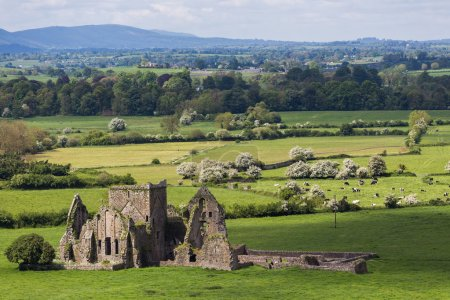 Hore Abbey ruins