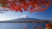 Hora Fudži a podzimní listí