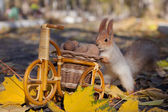 squirrel on a market driven nuts