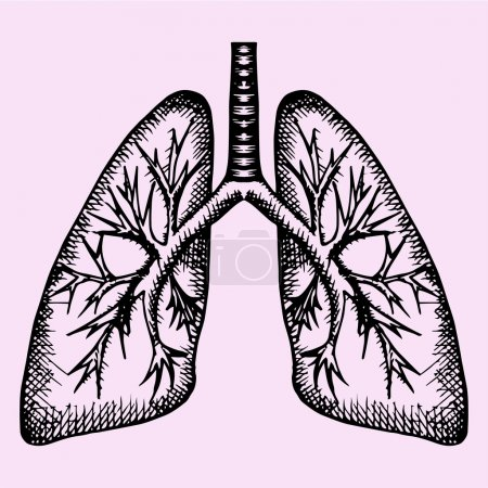 human lungs, doodle style