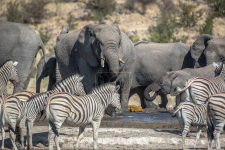 Wild Animals in northern Namibia