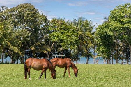 Horses roaming in soccer field