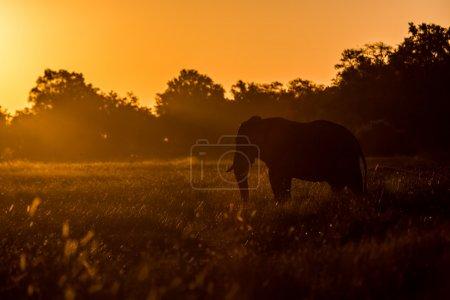 Elephant enjoying sunset